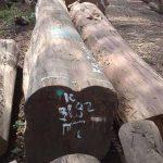 kayu jati perhutani ukuran besar